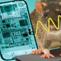 Money Well-spent To Find Rats Should Not Use Cell Phones