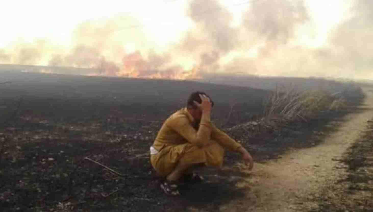 campi di grano incendiati